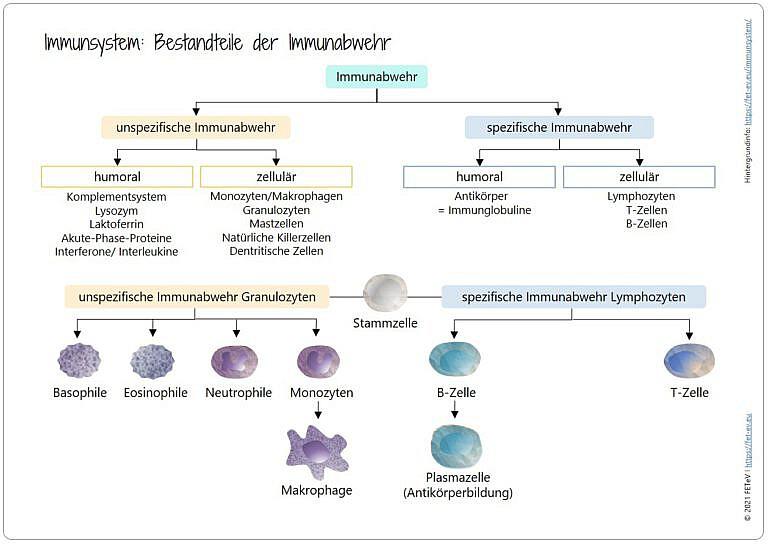 Blogazine Immunsystem
