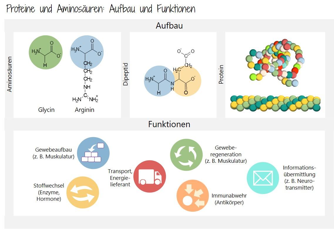 Blogazine Proteine und Aminosäuren
