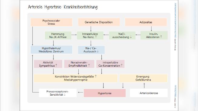 Hypertonie - Krankheitsentstehung