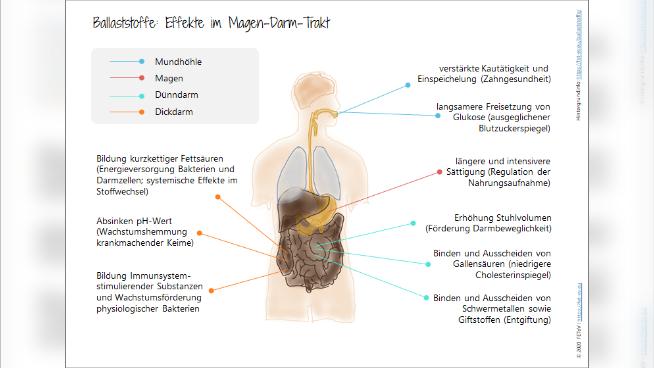 Beta-Glucane - Effekte im Magen-Darm-Trakt