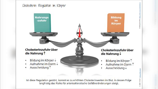 Cholesterin: Regulation im Körper