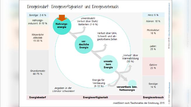 Energiebedarf: Energieverfügbarkeit und Energieverbrauch