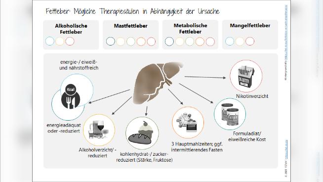 Fettleber: Mögliche Therapiesäulen in Abhängigkeit der Ursache