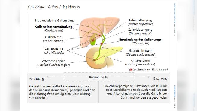 Gallenblase: Aufbau/ Funktionen
