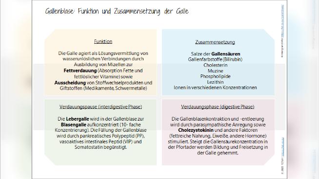 Gallenblase: Funktion und Zusammensetzung der Galle