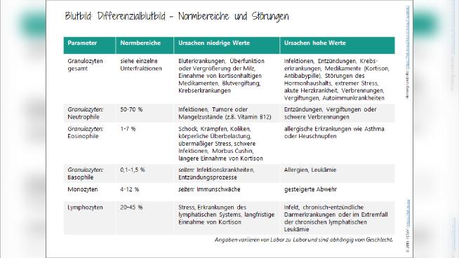 Blutbild - Differenzialblutbild: Normbereiche und Störungen