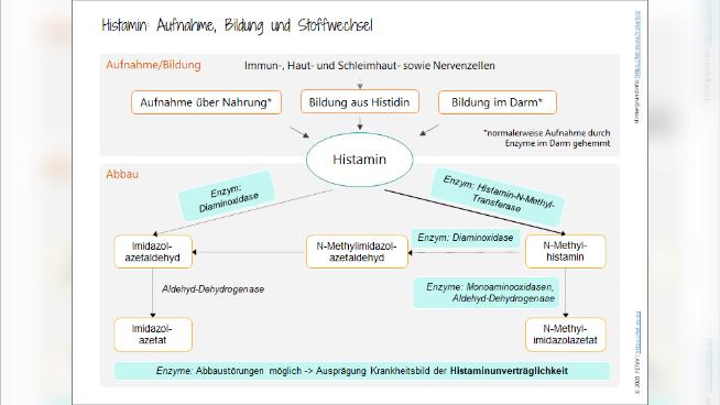 Histamin: Aufnahme, Bildung und Stoffwechsel
