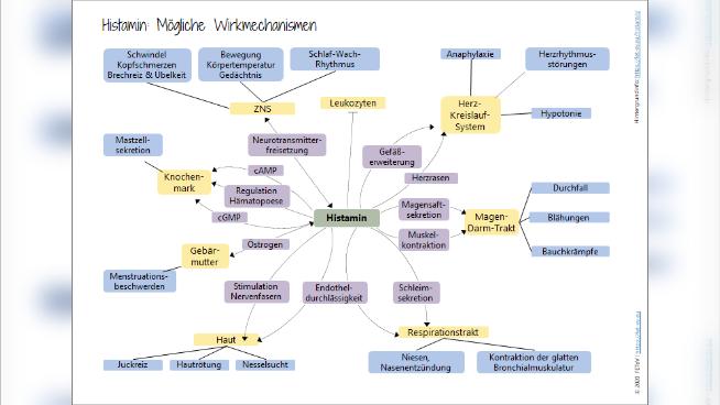 Histamin: Mögliche Wirkmechanismen