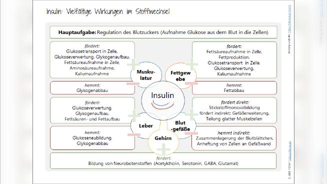 Insulin: Vielfältige Wirkungen im Stoffwechsel