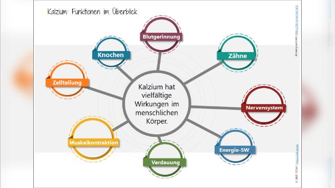 Kalzium: Funktionen im Überblick