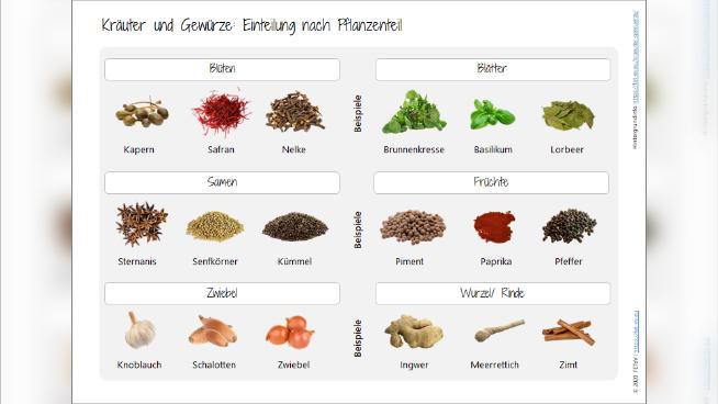 Kräuter und Gewürze: Einteilung nach Pflanzenteil