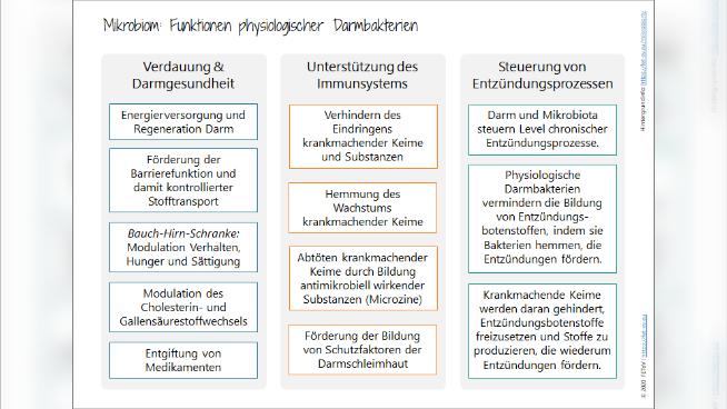 Mikrobiom: Funktionen physiologischer Darmbakterien