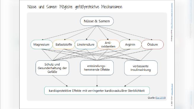 Nüsse und Samen: Mögliche gefäßprotektive Mechanismen