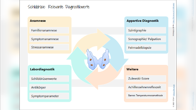 Schilddrüse: Relevante Diagnostikwerte