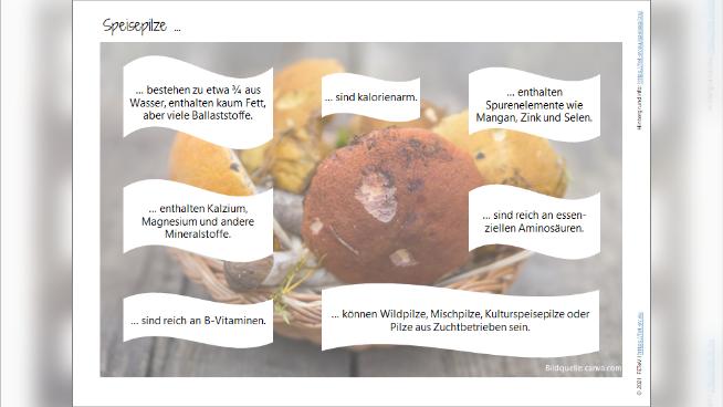 Speisepilze - Eigenschaften
